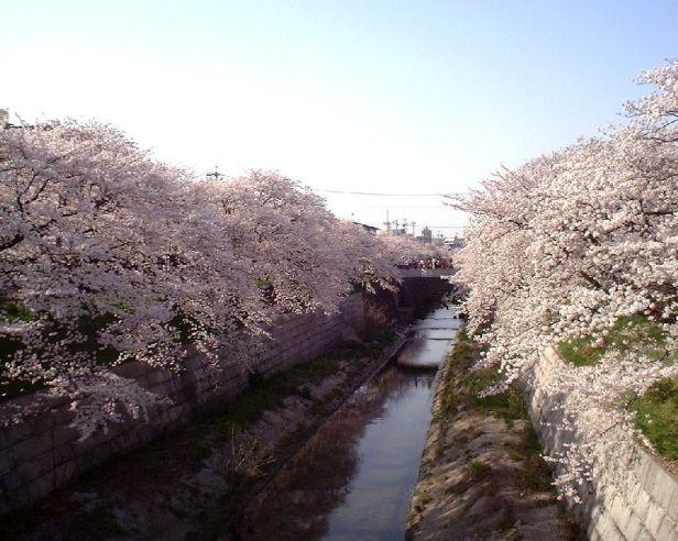 Yamazaki gawa